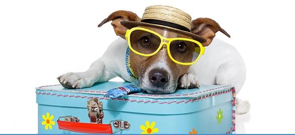 Lo más cool: viajar con tu mascota